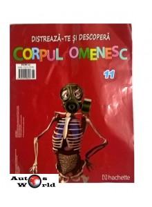 Corpul Omenesc Nr. 11 - bazin, vertebre, Hachette
